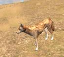 Coyote (2.5)