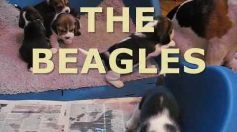 The Beagles - Help