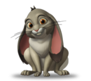 Clover the Rabbit