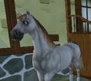 Häst (Star Stable)