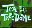 Tea at the Tree Dome