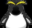 Rookie's penguin suit.