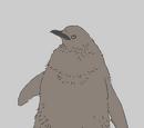 King Penguin Chick