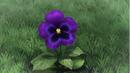 Dökkálfr como Flor común.png