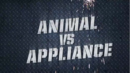 Animalvsappliance.png