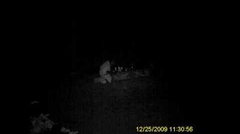 """Unknown """"Creature"""" Captured on Camera on Washington State Expedition"""