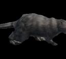 Grey Beaver