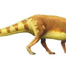 Eucnemesaurus