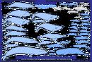 Cetacea whales.png