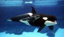 2 Killer Whales.jpg