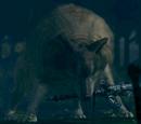 Сиф Великий Волк