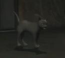 Isis (Cat)