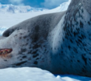 Leopardy the Leopard Seal