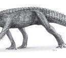 Anatosuchus