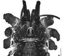Checklist of Kyrgyz Opiliones