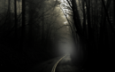 The dark creepy road 2.png