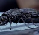 Coléoptères du futur