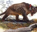 DW: Thylacoleo
