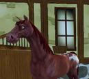 Hästar i level 6