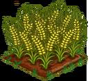 Australian Wheat 100.png