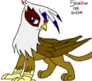 Shadow the Griffon