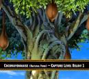 Cocomayo Tree
