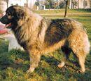 Szerb kutyafajták