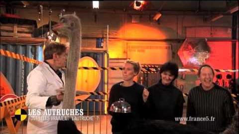 """ON N'EST PAS QUE DES COBAYES ! │ S02 E18 │Les autruches font-elles vraiment """"l'autruche"""" ?"""