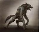 Werewolf drawing artist rendering.png