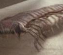 Mille-pattes du Silurien