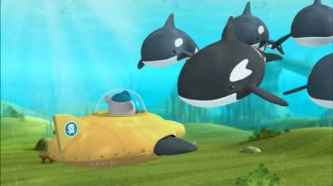 OCTONAUTS Orcas