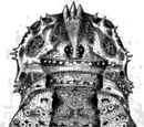 Odiellus spinosus