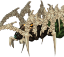 Brain Spider Imago