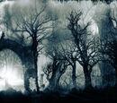 Bosque de la Desolación