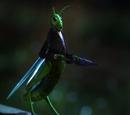 Cvrčak Džimini