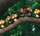 Toucan Kids