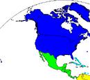 North American creators