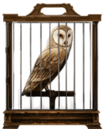 MM Barn Owl.png