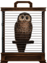 MM Brown Owl.png