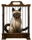 MM Siamese Cat.png