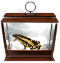 MM Harlequin Toad.png
