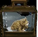 MM Natterjack Toad.png