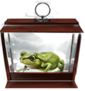 MM Western Green Toad.png
