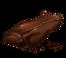 Chocogrenouille