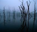 Grey Swamps