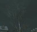Drzewo Wolności