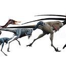 Troodontidae