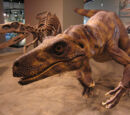 Basal theropods