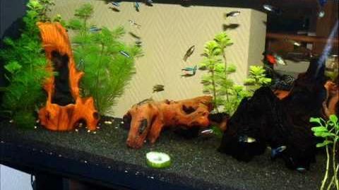 Alimentos para peces. (sano y natural)