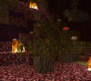 Hellbark Tree